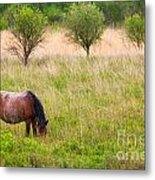 Wild Horse Grazing Metal Print
