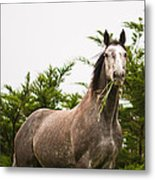 Wild Horse In The Wilderness Metal Print
