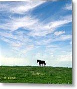 Wild Horse On Grassy Hill Metal Print