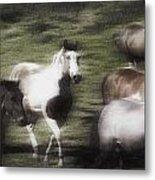 Wild Horses On The Move Metal Print
