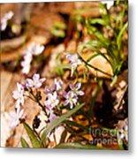 Wild Hyacinth Metal Print