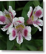 Wild Orchid Metal Print by Sean Green