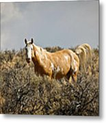 Wild Oregon Horse Metal Print