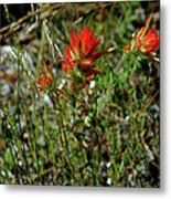 Wild Paint Brush Metal Print