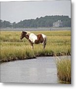 Wild Pony In The Marsh On Assateague Island Md Metal Print