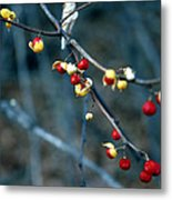 Wild Red Berries Out Of The Shell Metal Print