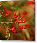 Wild Red Berry Reflections Metal Print