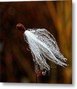Wild Seed Metal Print