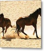 Wild Stallion Clash Metal Print