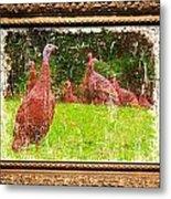 Wild Turkey - 3 Metal Print