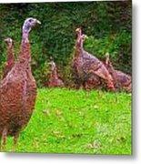 Wild Turkey - 4 Metal Print