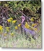 Wild Turkey - Gobbler - Thanksgiving Metal Print