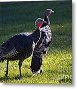 Wild Turkeys Metal Print by Mike  Dawson