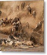 Wildebeest And Zebra Metal Print by Marsch1962UK