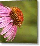 Wildflower Dew Drops Metal Print