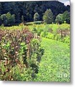 Wildflower Field Afternoon Metal Print