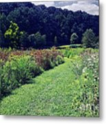 Wildflower Field Evening Metal Print
