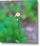 Wildflower IIi Metal Print