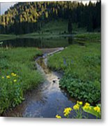 Wildflower Stream Metal Print