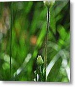 Wildflower1 Metal Print