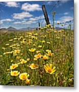 Wildflowers And Barbed Wire Metal Print
