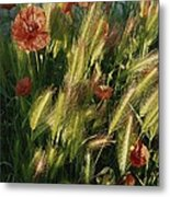 Wildflowers And Grass Tufts In Provence Metal Print