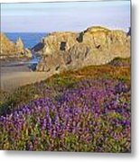 Wildflowers And Rock Formations Along Metal Print