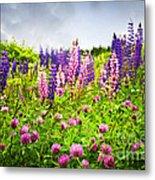 Wildflowers In Newfoundland Metal Print