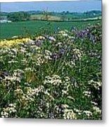 Wildflowers, Near Seaforde, Co Down Metal Print