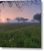 Wildflowers On A Foggy Pasture Metal Print