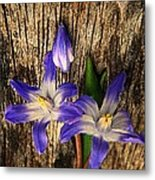 Wildflowers On Wood Metal Print