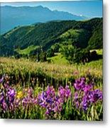 Wildflowers Umbria Metal Print