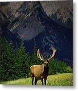 Wildlife In The Mountains Metal Print