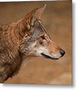 Wile E Coyote Metal Print