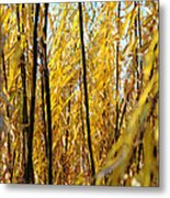 Willow Curtain Metal Print