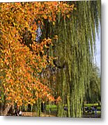 Willow In The Garden Metal Print