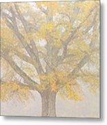Willow Oak In Fog Metal Print by Bill Swindaman