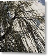 Willow Tree Metal Print by Todd Sherlock