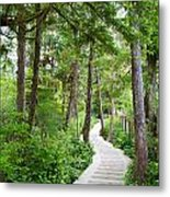 Winding Path Metal Print by Ivan SABO