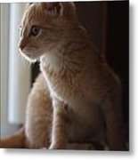 Window Light Metal Print
