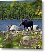 Window To The Moose Metal Print