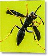 Window Wasp Metal Print