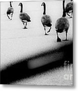 Windshield Wiper Metal Print