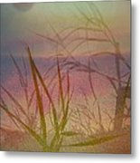 Windswept  Metal Print by Shirley Sirois