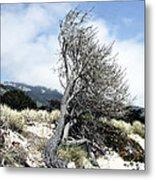 Windswept Tree Metal Print