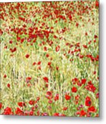 Windy Poppies Metal Print