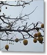 Windy Yellow Holly Five Metal Print
