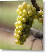 Wine Grapes Metal Print by Leslie Leda