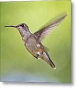 Winging It Metal Print