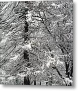 Winter 0001 Metal Print